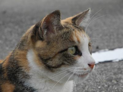 20120909猫通り2