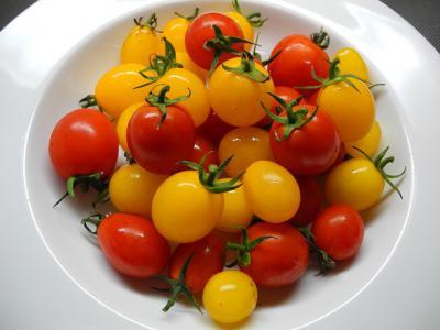 20121102ミニトマト