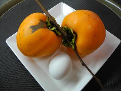 20121114みの柿