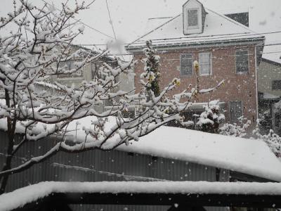 20120206雪のろう梅