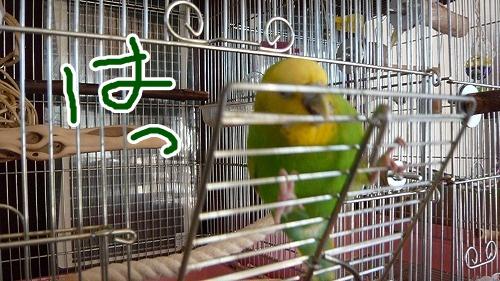 s-P1210613.jpg