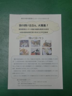 CIMG2538_convert_20121112145619.jpg