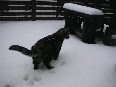 snow32.jpg