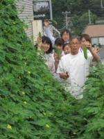 ゴーヤの収穫②