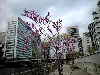 20120421品川風景(その2)