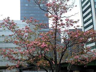 20120421品川風景(その5)