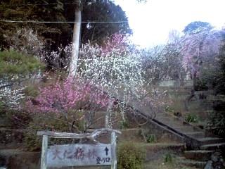 20120312大仁梅園(その1)