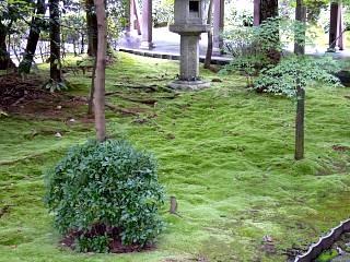 2007竜安寺(その8)