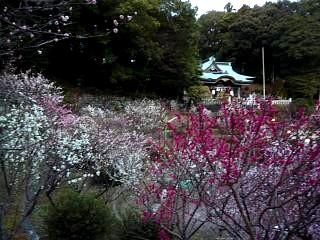 20120312大仁梅園(その4)