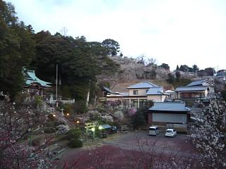 20120312大仁梅園(その9)