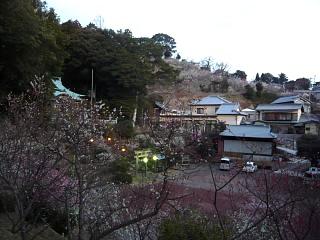 20120312大仁梅園(その10)