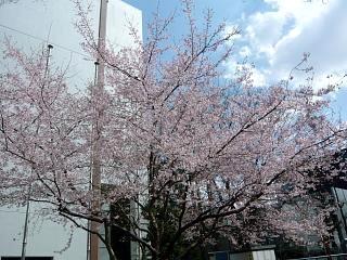 20120401母校入学式(その4)