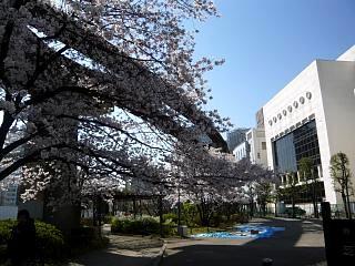 20120407芝浦の桜(その2)