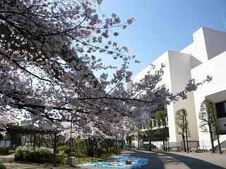 20120407芝浦の桜(その3)
