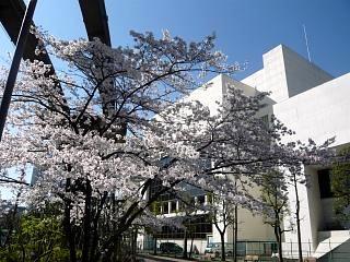 20120407芝浦の桜(その4)