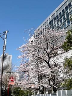 20120407芝浦の桜(その10)