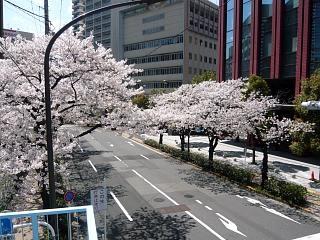 20120407芝浦の桜(その15)