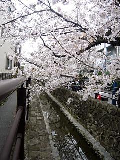 20120407二ケ領水の桜(その2)