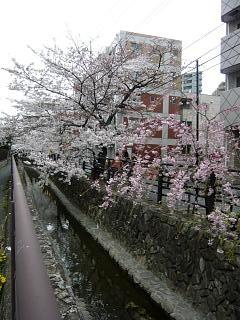 20120407二ケ領水の桜(その4)