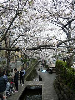 20120407二ケ領水の桜(その8)