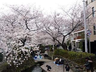 20120407二ケ領水の桜(その9)