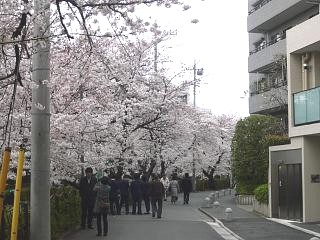 20120407二ケ領水の桜(その10)