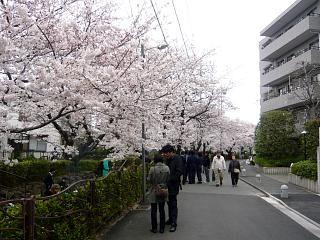 20120407二ケ領水の桜(その11)