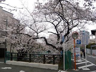20120407二ケ領水の桜(その12)