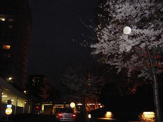 20120407三田の桜(その3)