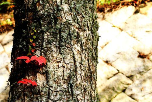 小さい秋見つけた・・・