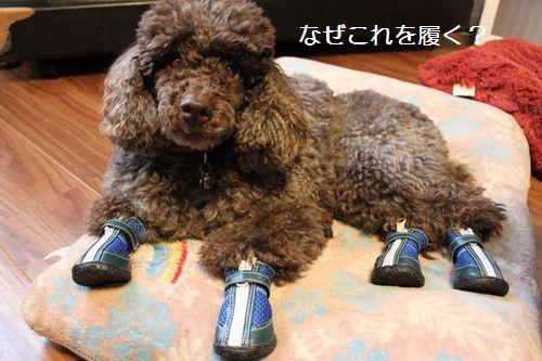 靴を履いたオヤジ