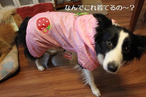 イチゴ姫1