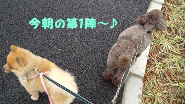ザック&ポン太 今朝の第1陣~♪