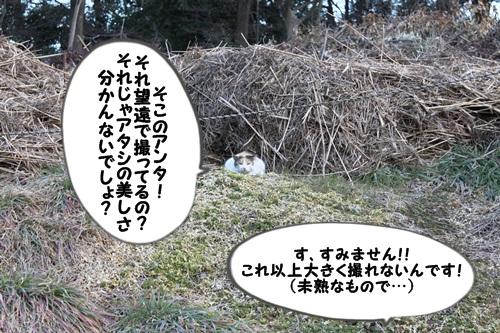猫 そこのアンタ!