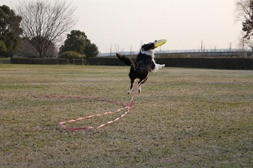 サラ ジャンプ