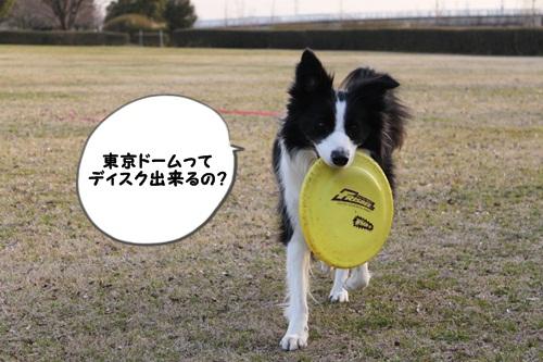 東京ドームってディスク出来るの?