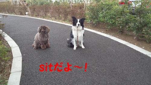 sitだよ~!