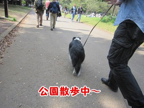 公園散歩中