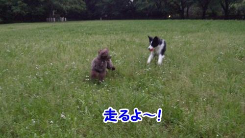 走るよ~!