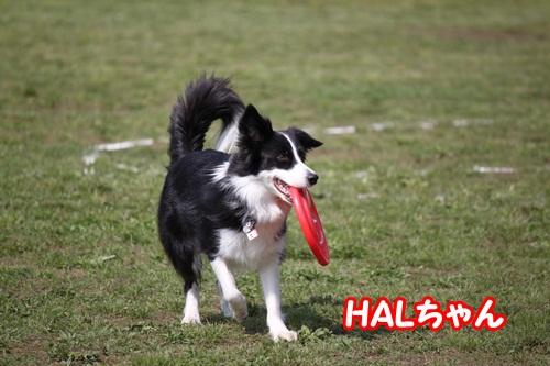 HALちゃん