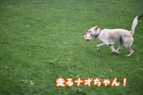 ナオちゃん 走る