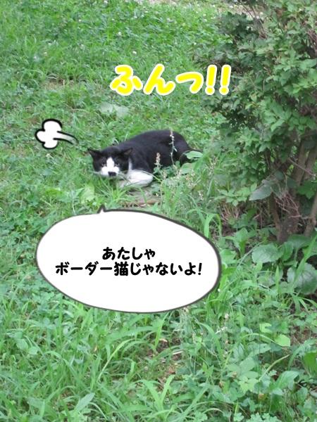 ボーダー猫