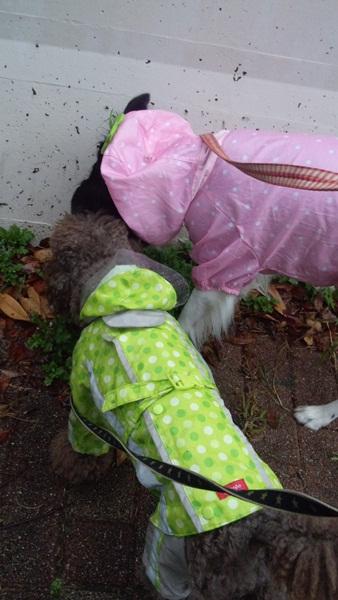 サラ&ザック 雨の日