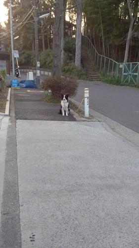 サラ 1人っ子散歩5