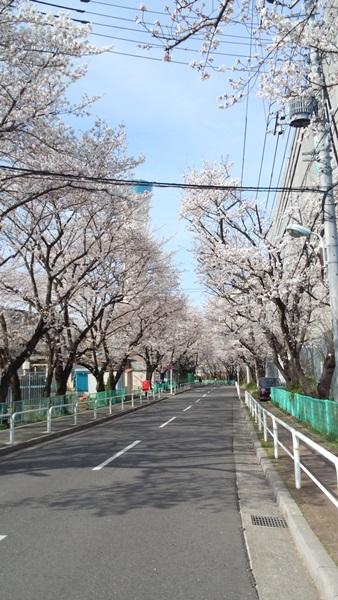 桜の木の下で3