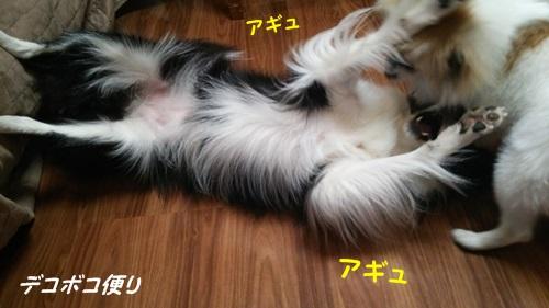20140926あらビックリ!6