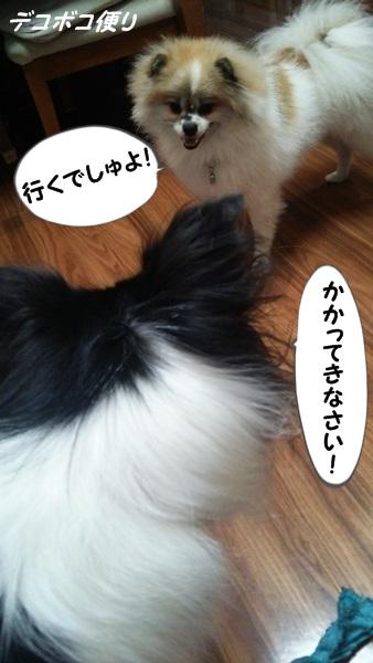 20140926あらビックリ!7