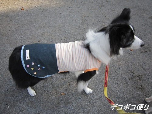 20141025 ブロ友さんとお揃いのワンコ服1