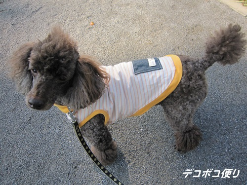 20141025 ブロ友さんとお揃いのワンコ服2