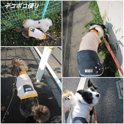 20141025 ブロ友さんとお揃いのワンコ服4